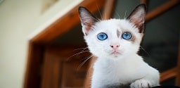Gattino carino