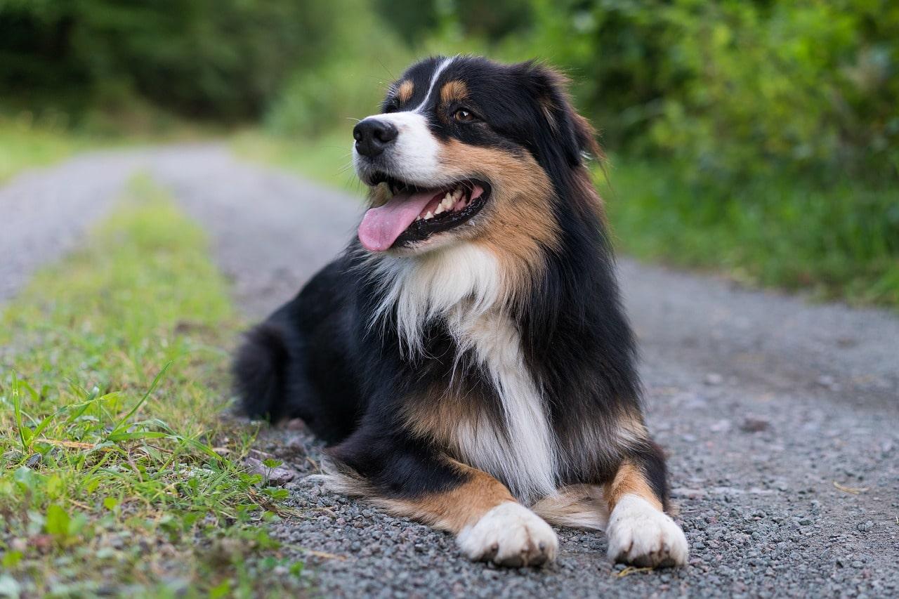 Fai fare la guardia al vostro cane da house sitter