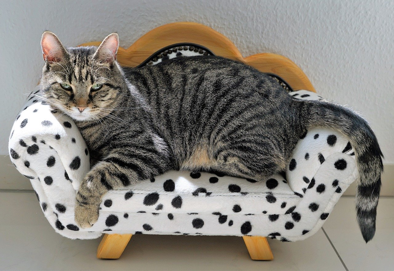 Cat lying on his couch