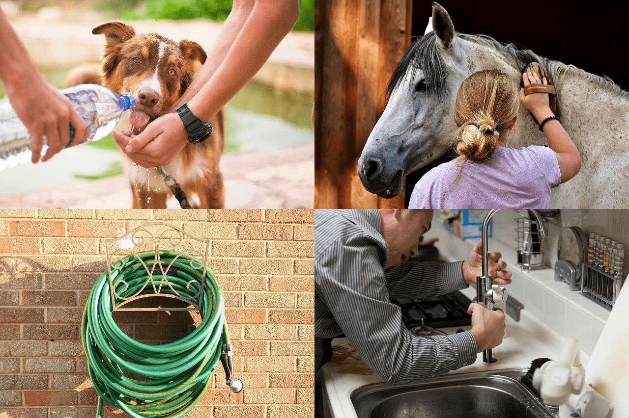 cão vigiado, cavalo tratado, mangueira de jardim, encanamento