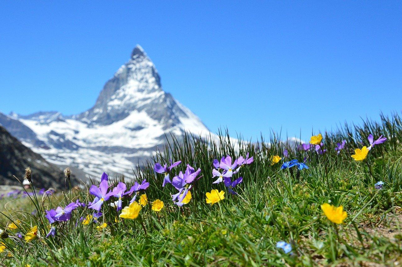 Flores silvestres nas montanhas