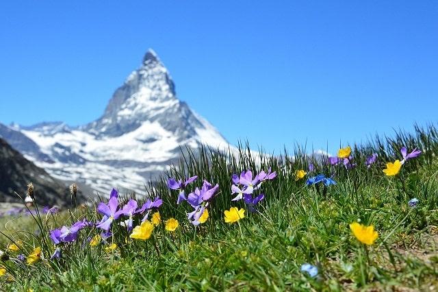 Fleurs sauvages à la montagne