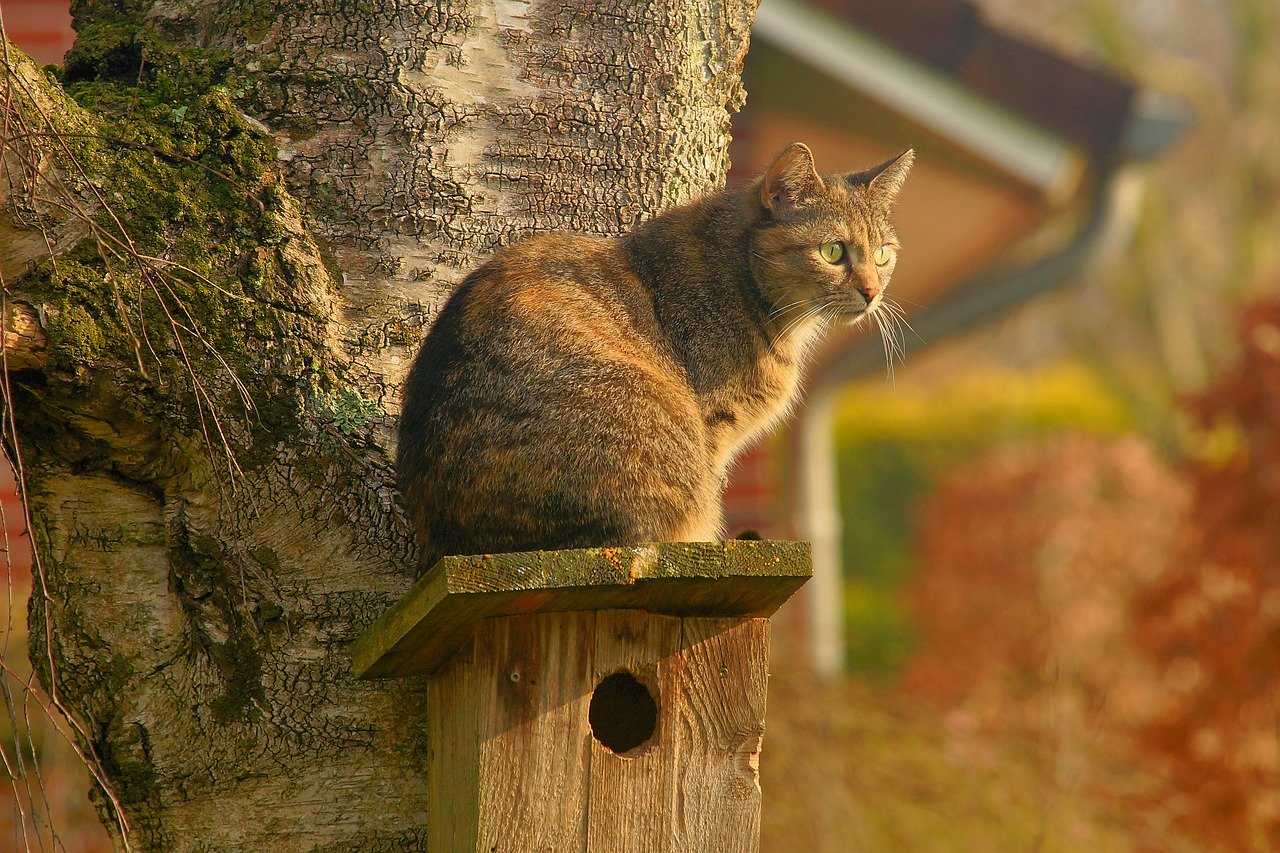 Perched Cat