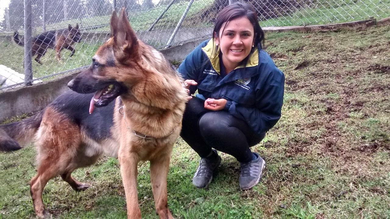 Pet-sitter qui garde un chien