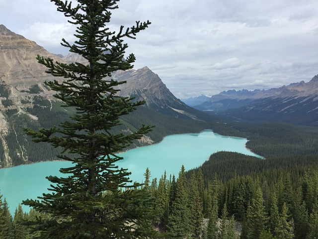 Peyto Lake, Alberta, Canadian Rockies