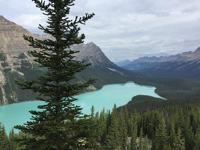 Lac Peyto, Alberta, Rocheuses canadiennes, parc national de Banff