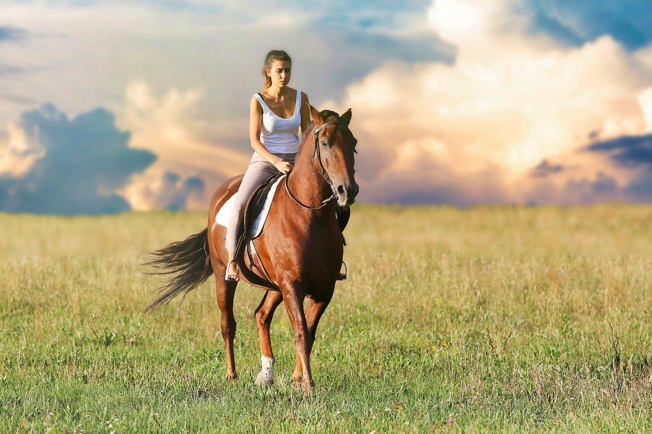 Cómo mantener su caballo
