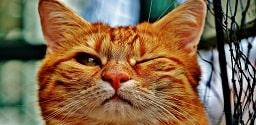 Gatto carino