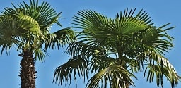 Sous les palmiers