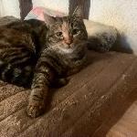 Mia-miyou-ruby, Home sitter Trensacq France | 2