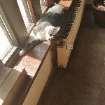 Mia-miyou-ruby, Home sitter Trensacq France | 4