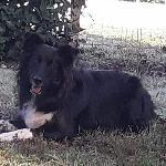 Mia-miyou-ruby, Home owner Trensacq France | 5