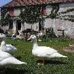Manugonties, Home owner Saint-Léger-Vauban France | 1
