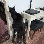 Marupereyra, Home sitter Monte Grande Argentina | 2