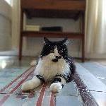 Meli, Home sitter Barcelona Spain | 4