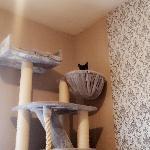 Sabrina, Home sitter Antony France | 1